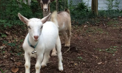 Baby pic: Slim and Shorty. Picture courtesy of 45 Parallel Consulting LLC.