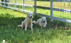 Pippo and Flo, Estate Security. Picture courtesy of 45 Parallel Consulting LLC.