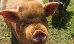 Have you met Kevin Bacon and his shy, smaller brother Figgy yet?